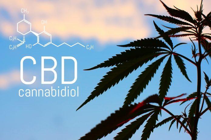 CBD Plant