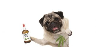 Cute smiling dog holding up a bottle of CBD Oil.